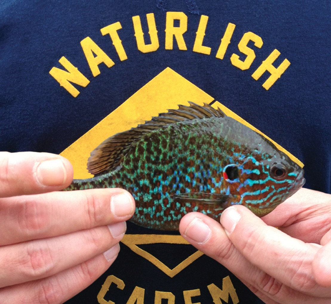 naturlish-streetfishing-couv